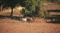 Bull Carriage Old Bagan Stock Footage