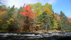 Rich colors of an autumn forest on a stony riverside Stock Footage