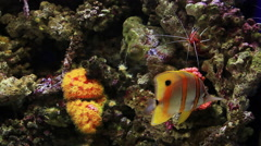 Corrals Fishes Stock Footage