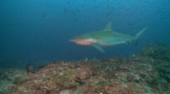 Shark marble ray Stock Footage