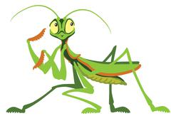 Mantis Stock Illustration