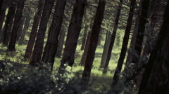 Scary dark forest,tall trees,camera crane movement, slow motion - stock footage