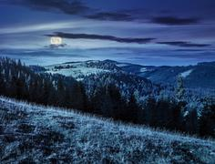 Coniferous forest in romaninan mountain  at night Stock Photos