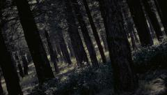 Scary dark forest,tall trees,camera crane movement, slow motion Stock Footage