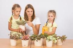 Mother and daughter consider and watering houseplants Stock Photos