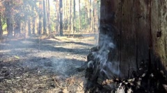 Smoke in the wood. Slow motion. Stock Footage