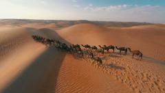 Group of camels being herded over sand dunes in the Arabian desert - stock footage