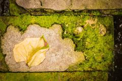 Dry leaves on brick. Stock Photos