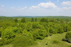 Reforestation area in Hainich National Park Thuringia Germany Europe - stock photo