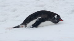 Penguin in the snow of Antarctica Stock Footage