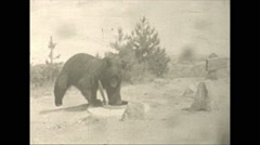 Vintage 16mm film, 1941, black bear climbing in car Stock Footage