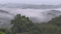 Mist over rainforest canopy Stock Footage