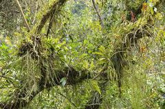 Small biotope with orchids bromeliads ferns and tillandsias in a forked branch Stock Photos