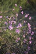 Close-up of uncultivated purple flowers Stock Photos