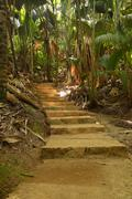 Stock Photo of Path with thick vegetation in the Vallee de Mai National Park UNESCO World