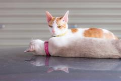 One cat lying down and one cat sitting on the car roof in the garage, focus o Stock Photos