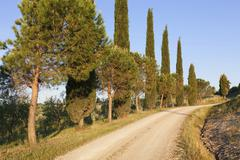 Stock Photo of Cypress avenue near San Quirico Val dOrcia Tuscany Province of Siena Italy