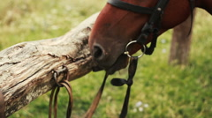 Horse in the field is tied to the fence Stock Footage