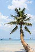 Stock Photo of Palm tree sandy beach turquoise sea Koh Tao island Gulf of Thailand Thailand