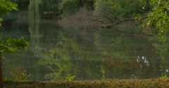 Forest Lake Overgrown Banks Rippling Water Trees' Reflection in the Water Stock Footage