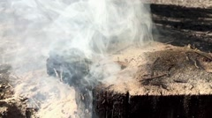 Smoke in the forest. Stock Footage