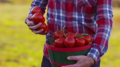 Farmer looking at basket of tomatoes Stock Footage