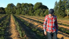 Farmer walking and looking at rows of crops - stock footage