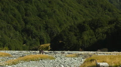 Hikers walking a trail near Broderick Hut, New Zealand - stock footage