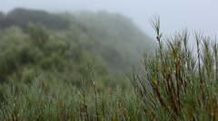 Dew drops on tree tops Stock Footage