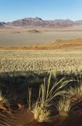 Sand dunes covered with bushman grass Stipagrostis sp arid desert plains and Stock Photos