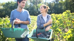 Young couple of wine-growers walking in vine rows - stock footage