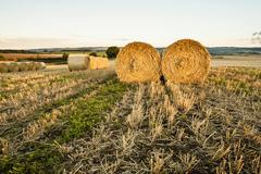 Stock Photo of Wheat hay bales and stubble field Newton Northumberland England United Kingdom