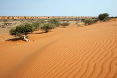 Stock Photo of Dunes in the Kalahari Kalkrand Namibia Africa