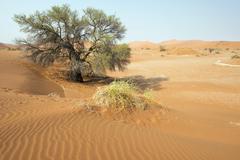 Sand dunes in Namib Desert NamibNaukluft National Park Sossusvlei Namibia - stock photo