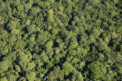 Amazon rainforest aerial view Para state Brazil South America Stock Photos