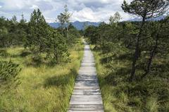Stock Photo of Boardwalk path through the Murnau moor Murnau Upper Bavaria Bavaria Germany