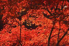fall season in Tofukuji Temple - stock photo
