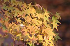 Fall season in Tofukuji Temple Stock Photos