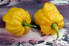 Pepper yellow lantern chili Capsicum chinense - stock photo