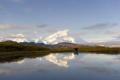 Mount Denali reflected in lake Moose Alces alces standing in the water Denali Stock Photos