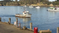 Fishing boat returning to Halfmoon Bay on Stewart Island, New Zealand Stock Footage