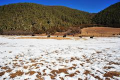 Pudacuo Grass land Stock Photos