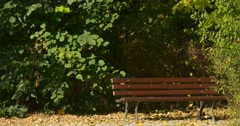 Empty Wooden Bench at Park Alley Sunny Green Bushes are Behind the Bench Yellow Stock Footage