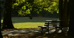 Empty Wooden Bench Under The Large Tree in Park Avenue Alley Sunny Day Sun Rays - stock footage