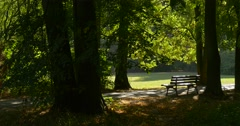 Empty Bench at The Park Alley Footpath Tree Trunks Sun Rays Through the Leaves Stock Footage