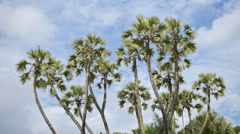 Palm tree leaves moving in air, time lapse movie Stock Footage