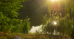 Man With Backpack Comes to Overgrown River Bank Forest Lake Man Sit Put His Stock Footage