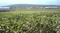 Cotton field wide shot,industrial,agriculture Stock Footage