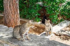 Street cats are waiting for food - stock photo