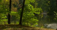 Forest Lake River Water Trees Are Around Green Leaves Foliage Overgrown Bank Stock Footage